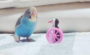 かわいいインコ(゚∈゚ )